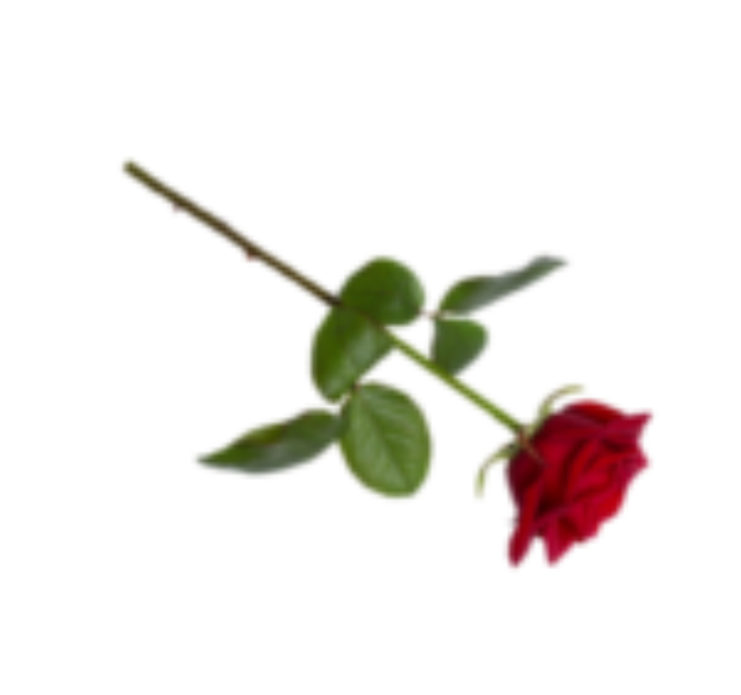 rose use this
